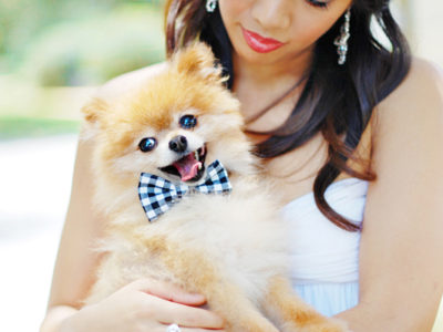 27 Adorable Wedding Dogs