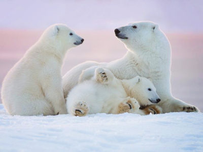 25 Heart-warming Animal Family Portraits