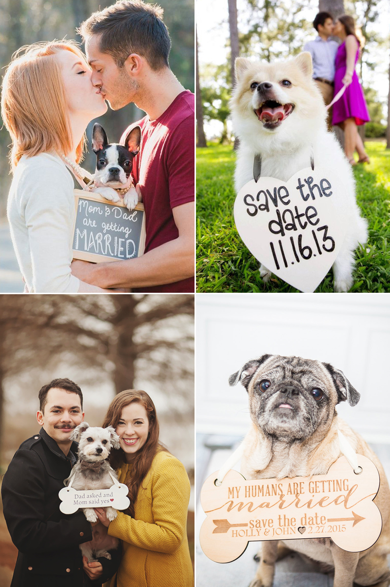 engagement-announcement05-furryfriends